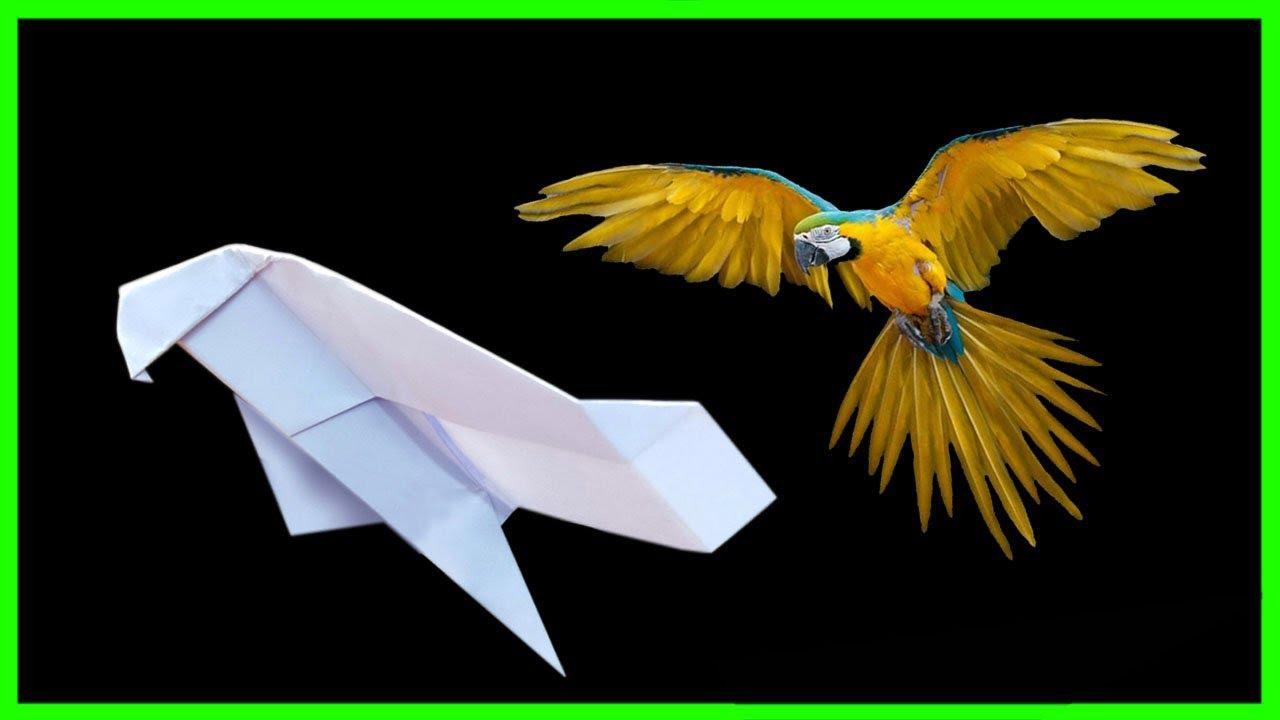 Cách gấp máy bay boomerang hình con vẹt   origami boomerang   easy origami