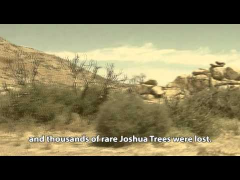 Reforestation in the California deserts with the Waterboxx