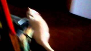 моя кошка Муся. Я пытаюсь узнать что хочет она ?
