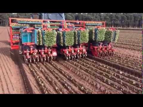 CHECCHI & MAGLI - DUAL 12 GOLD 12 ROWS CABBAGES TRANSPLANTER