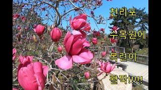 세상에서 가장 아름다운 천리포수목원 걸어보기 1부(천리…