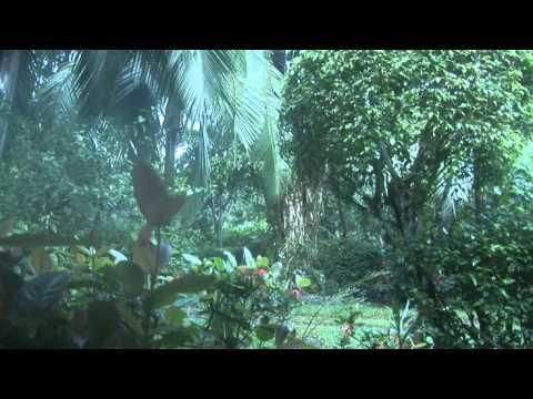 jungle-cam--t4