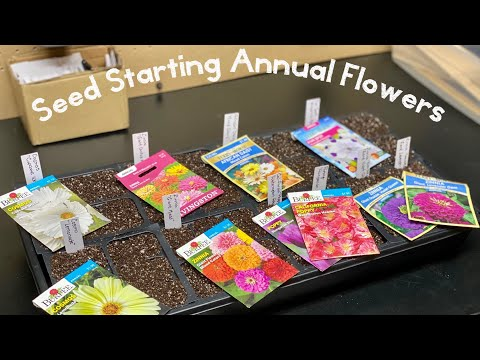 How to Start Annual Flowers from Seed Indoors – Home Gardening
