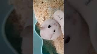 오뷰점빵] 오구오구 찐빵이