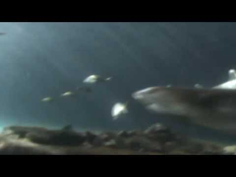 Sydney Aquarium - Underwater Glass Tunnel