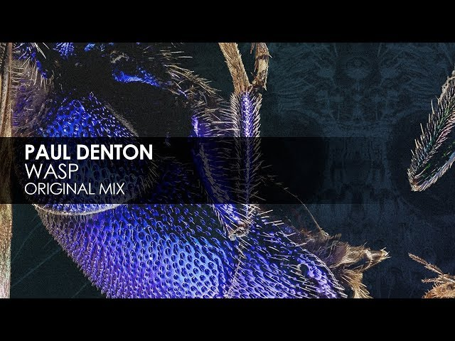 Paul Denton - Wasp (Original Mix)