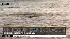 Un requin dans le lagon : baignade interdite à Saint Leu - 23/03/2019