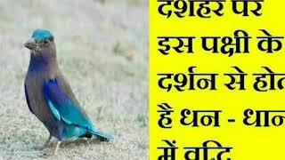 दशहरे पर इस पक्षी के दर्शन से होती है धन-धान्य मे वृद्धि