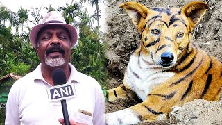 Соседи смеялись, когда фермер превратил своего пса в тигра, но когда узнали, зачем он это сделал...
