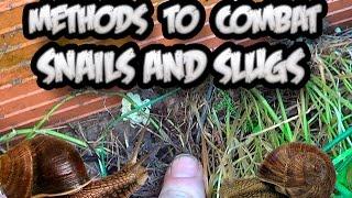 10 Methods To Combat Snails And Slugs || Ecologic || Toni's Organic Vegetable Garden