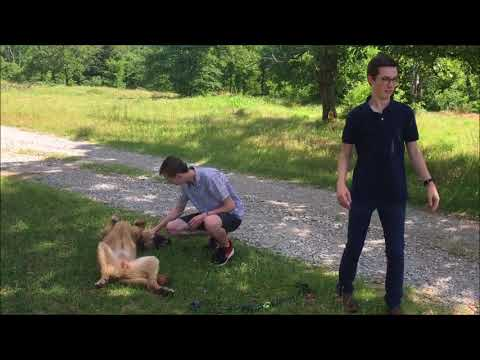 The Mayor's Son and the Dog