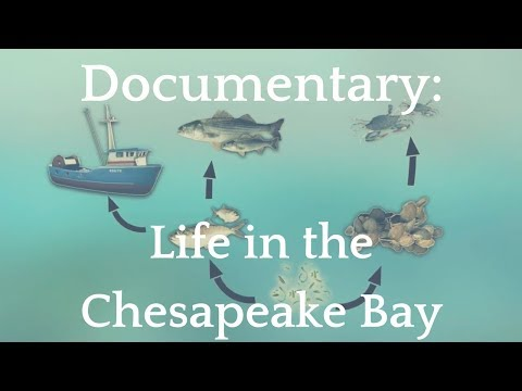 Documentary: Life in the Chesapeake Bay