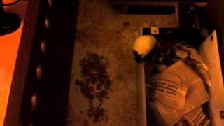 Мыши в новом доме(, 2014-11-17T22:06:05.000Z)