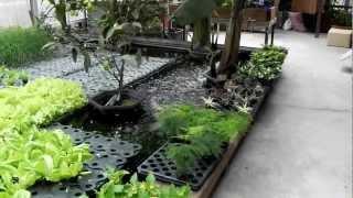 大型生態共生池~上面種菜瓜~下面養魚蝦~上華造景~0958505913陳立偉 thumbnail