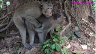 Monkey finding love but she don
