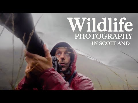 PHOTOGRAPHING WILD STAGS In SCOTLAND And Meeting Adam From First Man Photography