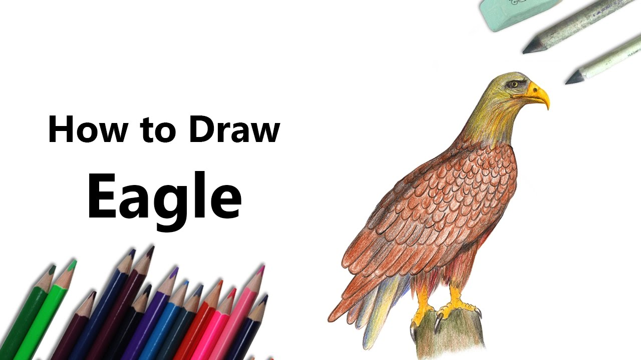 how to draw a eagle with color pencils time lapse youtube