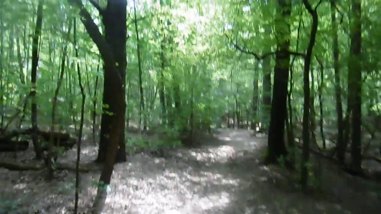 Wandern in der Heide von Dresden - YouTube