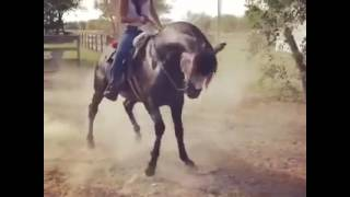 Download Video نسخة عن Beautiful girl dancing on a Mexican horses in a beautiful way MP3 3GP MP4