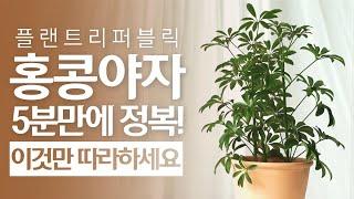 SUB) 5분만에 홍콩야자 정복하기!|수경재배 물주기 …