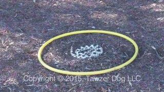 A Positive Rattlesnake Avoidance Training And Safety Program - Pamela Johnson