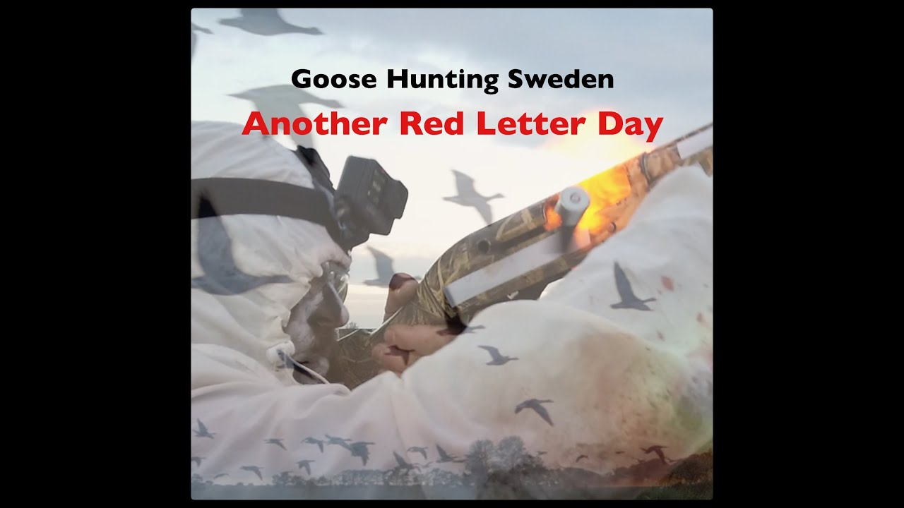 Goose Hunting Sweden - Another Red Letter Day