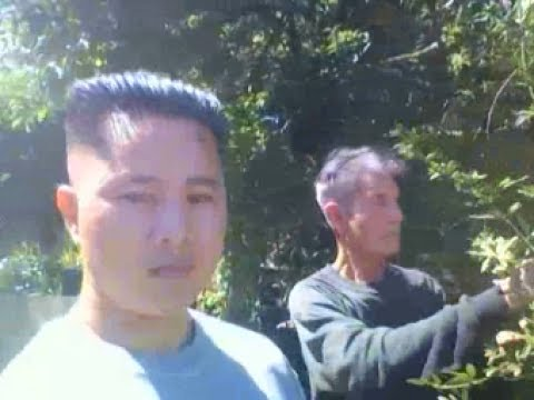 """Mike Huynh and Tai Huynh Live TV Show HK""""[Huynh Garden Centre]""""  San Jose, California 95121"""