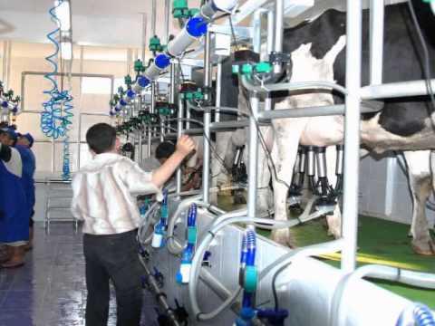 Otat Gida Süt ürünleri Youtube
