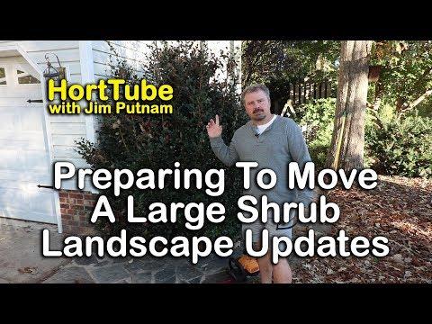 Preparing Large Shrub To Be Moved - Landscape Updates - Maintenance Monday