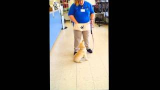 Teaching Your Dog How To Spin With Kennelwood Trainer Kim Hyde