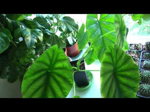 Вопрос: Катопсис пониклый, какой грунт нужен для выращивания?