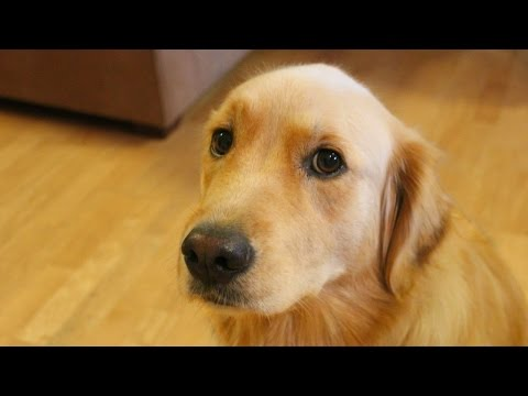Jealous Dog Want Attention Compilation NEW