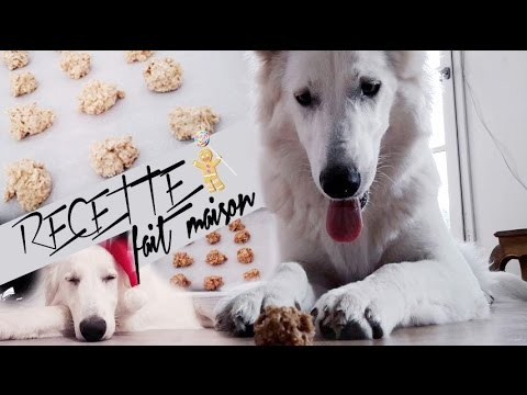 recette biscuit pour chien fait maison facile et rapide youtube. Black Bedroom Furniture Sets. Home Design Ideas