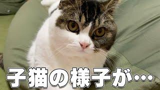 おや…??子猫の様子が…?????
