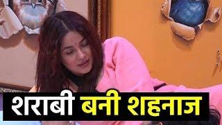 Bigg Boss 13 : Shehnaz Kaur Gill Acts Like A Drunkard Before Siddharth Shukla In BB House   Day 24