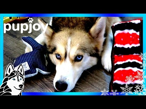 HUSKIES TALKING | PupJoy Unboxing with Dog Commentary