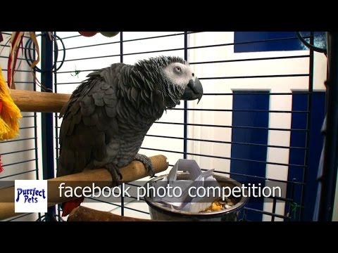 Robbie the Parrot – Photo Competition Winner