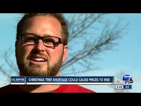 Christmas tree shortage could cause prices to rise