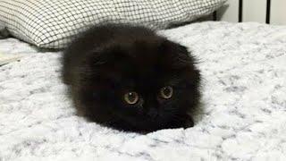 まっくろくろすけ!可愛すぎる黒猫が話題! thumbnail