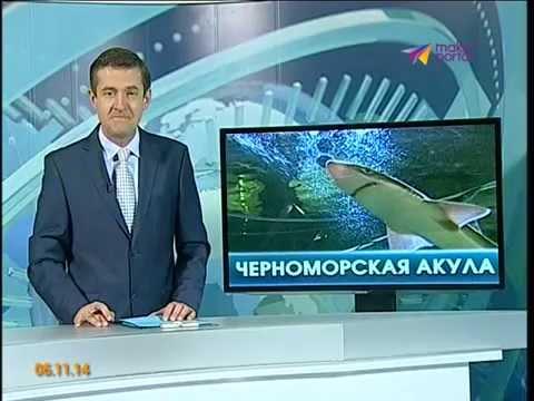 Сонник рыбы в Море приснились, к чему снятся рыбы в Море