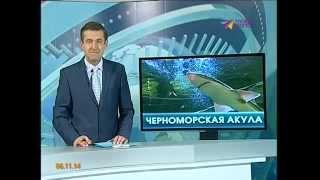 В Черном море живут  колючие акулы(Изучить подводным мир Черного моря можно в аквариуме на Новой Мацесте., 2014-11-06T17:12:10.000Z)