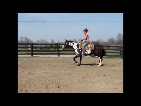 LOUD COLORED BLACK & WHITE OVERO PAINT MARE, LOW HEADED AND QUIET NATURED, TRAIL HORSE