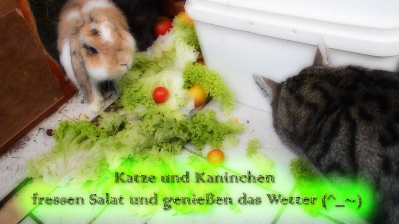 katze und kaninchen fressen salat und genie en das wetter. Black Bedroom Furniture Sets. Home Design Ideas