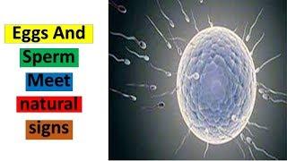 Without eggs Research sperm fertilizing