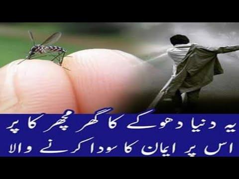 Duniya dhoke ka ghar 💔 Molana Tariq Jameel