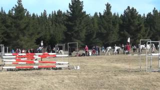 Rocky Showjumping 1.05m Roydvale ODE.