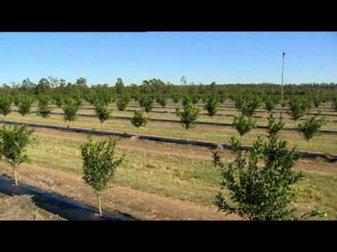 Netafim Australia Nutrigation Citrus