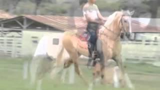 IBÉRICA PORTEIRA AZUL X FATOR DA CAVARÚ-RETÃ
