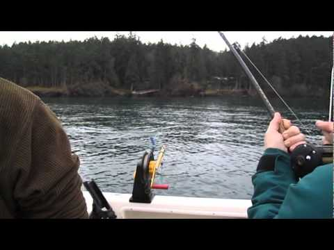 Blackmouth fishing in the san juan islands youtube for 13 fishing fate black