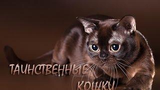 Тайны кошек.  Таинственные кошки видео.